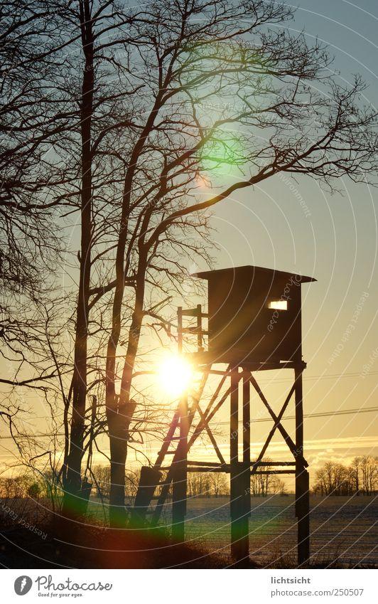 Zimmer mit Aussicht Ausflug Natur Landschaft Himmel Sonnenaufgang Sonnenuntergang Schönes Wetter Eis Frost Schnee Baum Feld Wald Wege & Pfade wandern Hochsitz