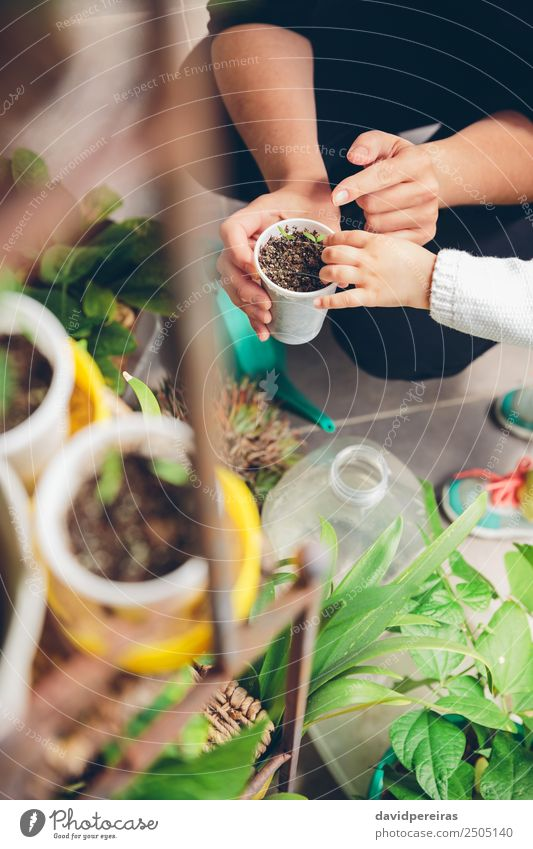 Frau Mensch Natur Pflanze Stadt grün Hand Haus Erwachsene natürlich klein Garten Arbeit & Erwerbstätigkeit Erde Wachstum frisch