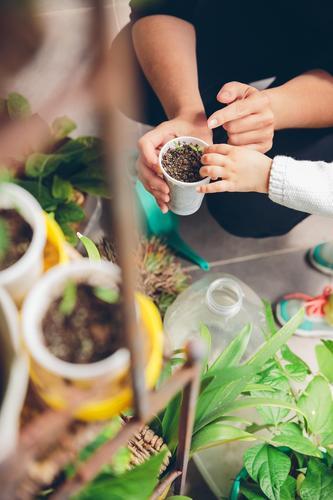 Frauenhände zeigen Mädchen jungen Setzlingen im Topf Gemüse Haus Garten Arbeit & Erwerbstätigkeit Gartenarbeit Mensch Erwachsene Hand Natur Pflanze Erde Stadt