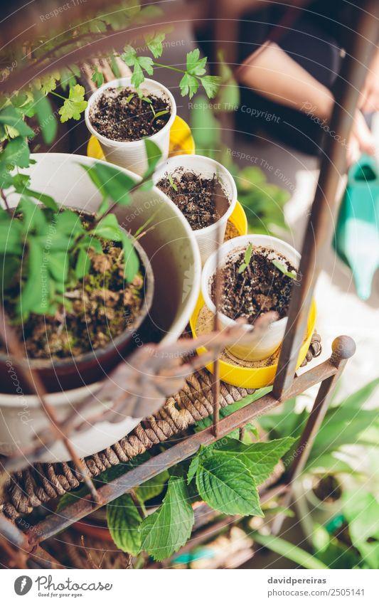 Frau Mensch Natur Pflanze Stadt grün Hand Haus Erwachsene natürlich Garten Arbeit & Erwerbstätigkeit Freizeit & Hobby Erde Wachstum frisch