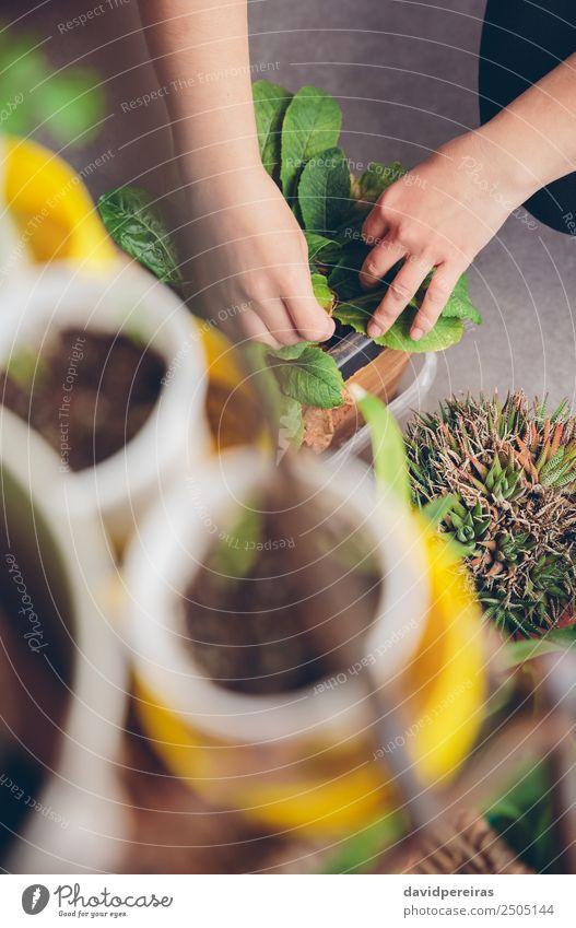 Frau Mensch Natur Pflanze Stadt grün Hand Haus Erwachsene Leben natürlich Garten Arbeit & Erwerbstätigkeit Freizeit & Hobby Erde Wachstum