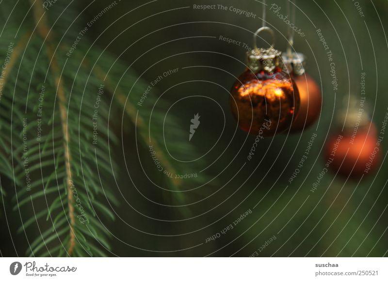 soon ... Feste & Feiern Umwelt Natur Grünpflanze hängen dunkel grün Brauchtum Tradition Weihnachtsschmuck Christbaumkugeln Tannenbaum Tannennadel