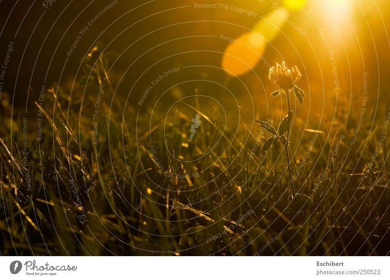 Letzter Glanz Natur Pflanze Sonne ruhig Erholung Herbst Wiese Freiheit Landschaft Gras Glück Zufriedenheit Kraft Erde glänzend Vergänglichkeit