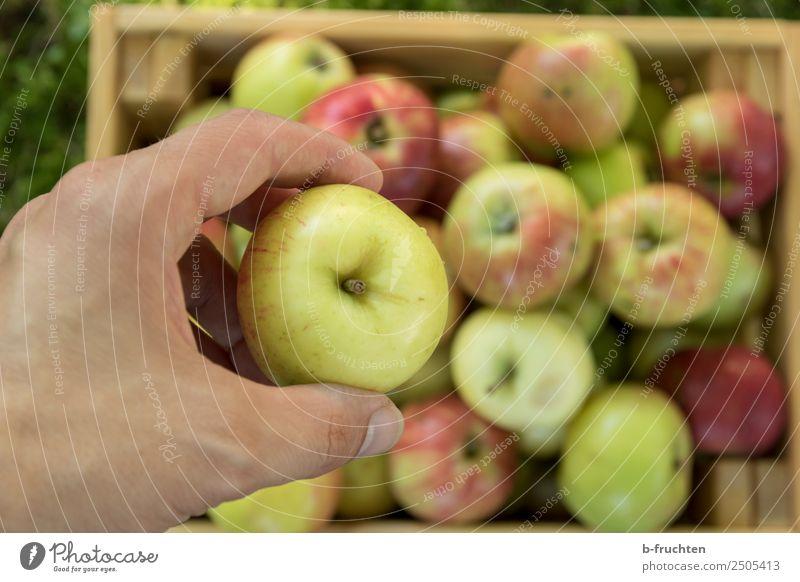 Frische Äpfel Lebensmittel Frucht Bioprodukte Hand Finger Kasten Holz wählen festhalten frisch Gesundheit Freizeit & Hobby Freude Apfel Apfelernte Ernte