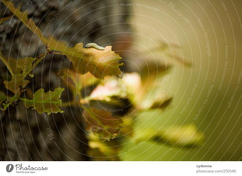 Da ist der Wurm drauf Natur schön Baum Blatt ruhig Leben Umwelt Freiheit Bewegung Wege & Pfade klein träumen Zeit ästhetisch einzigartig Neugier