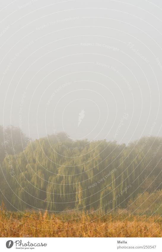 Eines Morgens Natur Baum ruhig Umwelt Landschaft Stimmung Nebel Wachstum natürlich Klima geheimnisvoll