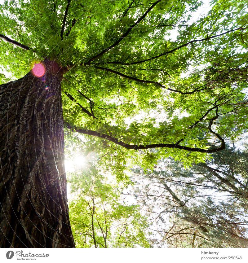 sundowner Natur Baum Pflanze Sommer ruhig Wald Erholung Umwelt Landschaft Freiheit Frühling Garten Kunst Park Freizeit & Hobby Klima