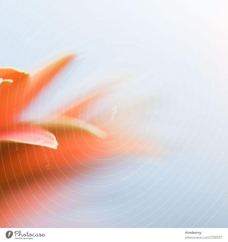 out of focus Lifestyle Leben harmonisch Wohlgefühl Zufriedenheit Erholung Meditation Duft Kur Spa Massage Dampfbad Umwelt Natur Pflanze Frühling Sommer Blume
