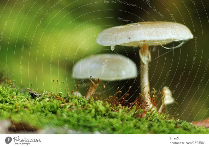 Waldpilze I Natur Pilz Moos braun grün rot weiß Farbfoto Außenaufnahme Menschenleer Tag Licht Schwache Tiefenschärfe