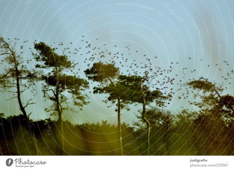 Weststrand Umwelt Natur Landschaft Pflanze Tier Himmel Baum Gras Wald Küste Ostsee Wildtier Vogel Tiergruppe Schwarm fliegen frei natürlich wild Stimmung Star