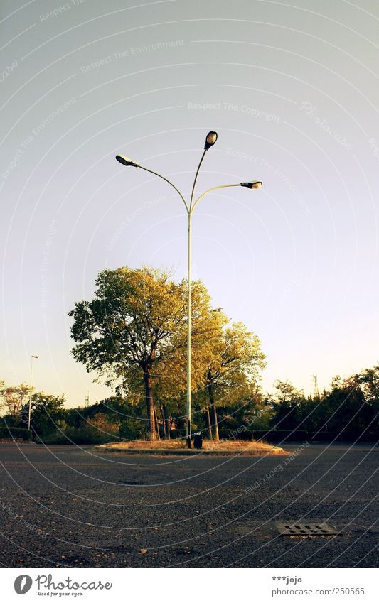 the origin of symmetry. Baum Pflanze Sommer ruhig Park Beleuchtung gold leer Pause trist Asphalt Laterne Straßenbeleuchtung parken Parkplatz Symmetrie