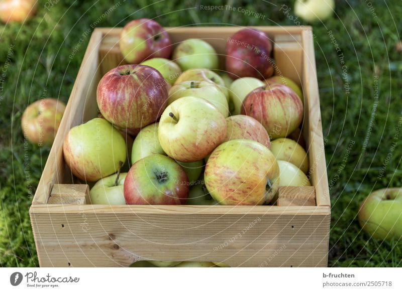 Eine Kiste voller frischer Äpfel Frucht Bioprodukte Vegetarische Ernährung Gesunde Ernährung Landwirtschaft Forstwirtschaft Sommer Herbst Gras Garten Kasten