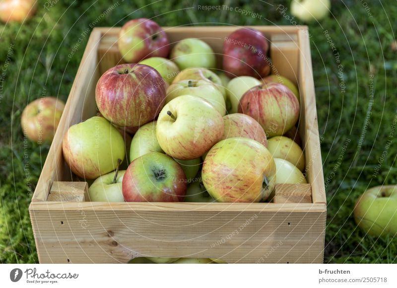 Eine Kiste voller frischer Äpfel Sommer Gesunde Ernährung Gesundheit Herbst natürlich Holz Gras Garten Frucht genießen Landwirtschaft Apfel Bioprodukte reif
