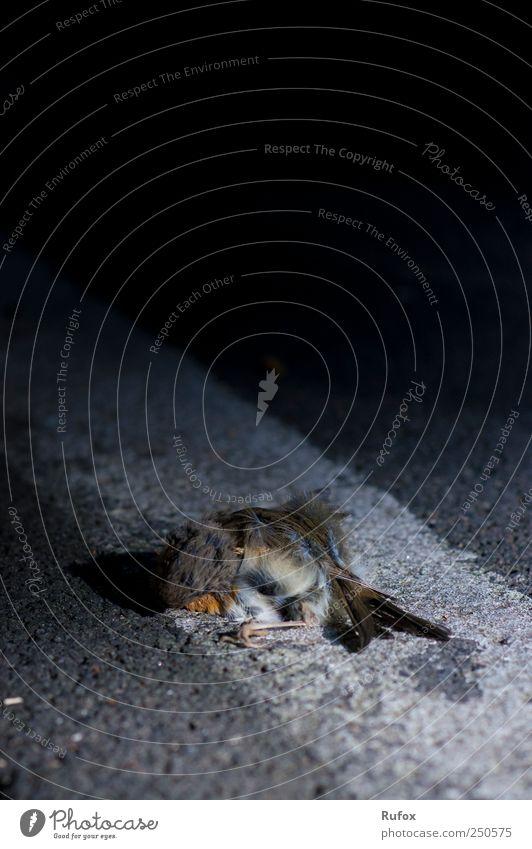 leise schlafen... Natur Einsamkeit Tier Straße dunkel kalt Tod Traurigkeit Vogel Angst liegen ästhetisch natürlich gefährlich trist Trauer