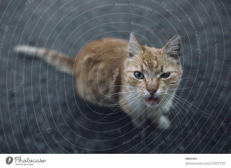 streunende Katze bittet um Futter und schaut in die Kamera. Lifestyle Freizeit & Hobby Spielen Ferien & Urlaub & Reisen Tourismus Ausflug Abenteuer wandern
