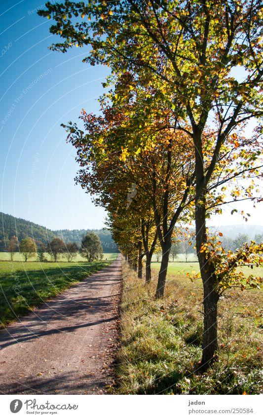 sonnenallee. blau Baum Blatt Ferne Straße Wiese Herbst Wege & Pfade Horizont wandern Romantik Unendlichkeit Idylle entdecken Schönes Wetter Allee