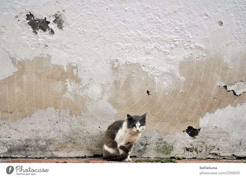 Nicht mein Tag. Mauer Wand Tier Haustier Katze Tiergesicht Fell 1 sitzen Teneriffa mediterran Erholung erholsam Putztuch Putzfassade Farbfoto Gedeckte Farben