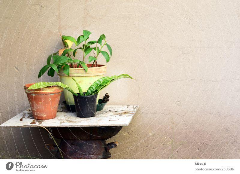 es grünt ein wenig Dekoration & Verzierung Pflanze Blume Blatt Wachstum Trieb keimen Topfpflanze Blumentopf Tisch alt umtopfen Farbfoto Menschenleer