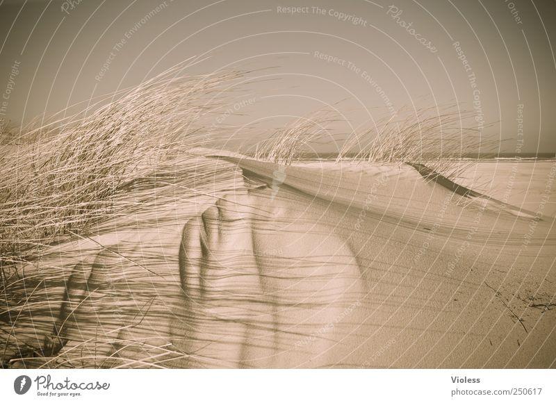 Spiekeroog | ...windy dune Natur Strand Erholung Umwelt Landschaft Sand Nordsee Düne entdecken Dünengras Nordseeinsel