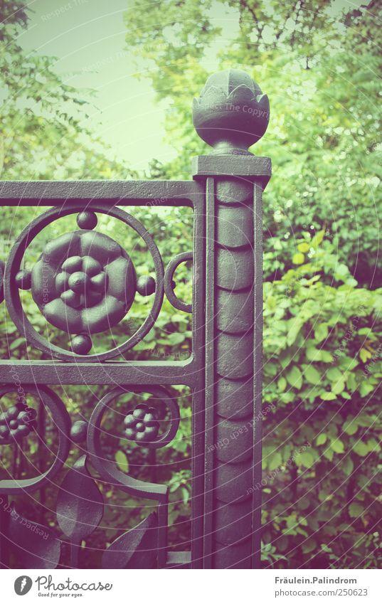 Der geheime Garten. Pflanze Grünpflanze Park Metall gehen schwarz Tor Tür Zaun Zaunlücke verziert Durchgang Wege & Pfade Metallzaun Barriere offen schließen
