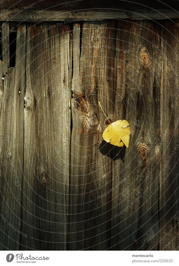 Single Umwelt Natur Pflanze Sonnenlicht Herbst Schönes Wetter Blatt Park Seeufer Tür Holz authentisch klein natürlich braun gelb gold schwarz Türblattl Farbfoto