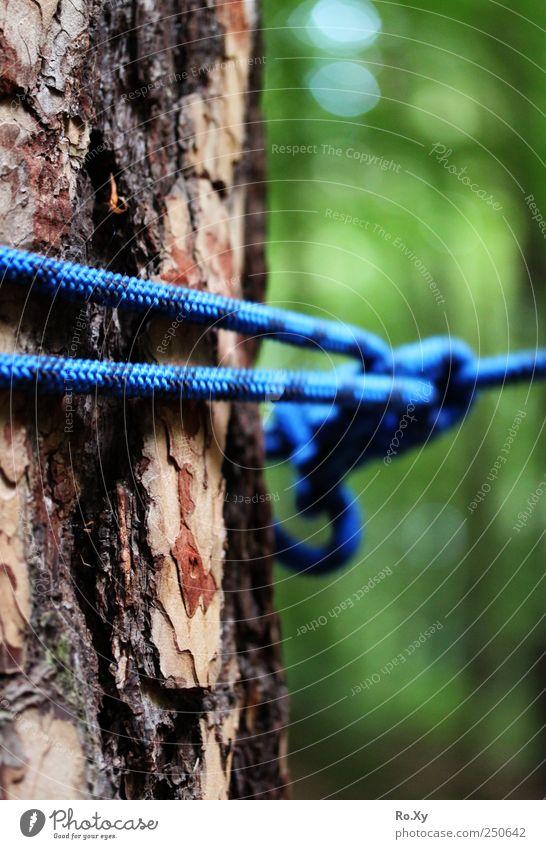 Der Kletterwald... Natur Baum Berge u. Gebirge lustig Freizeit & Hobby Erde Schönes Wetter Seil Abenteuer Klettern entdecken Kontrolle Bergsteigen bauen toben