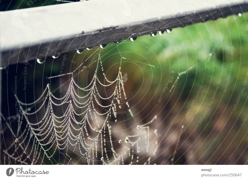 tropfen Natur Pflanze Tier Regen nass Wassertropfen natürlich Trauer Netz schlechtes Wetter Spinnennetz Biotop
