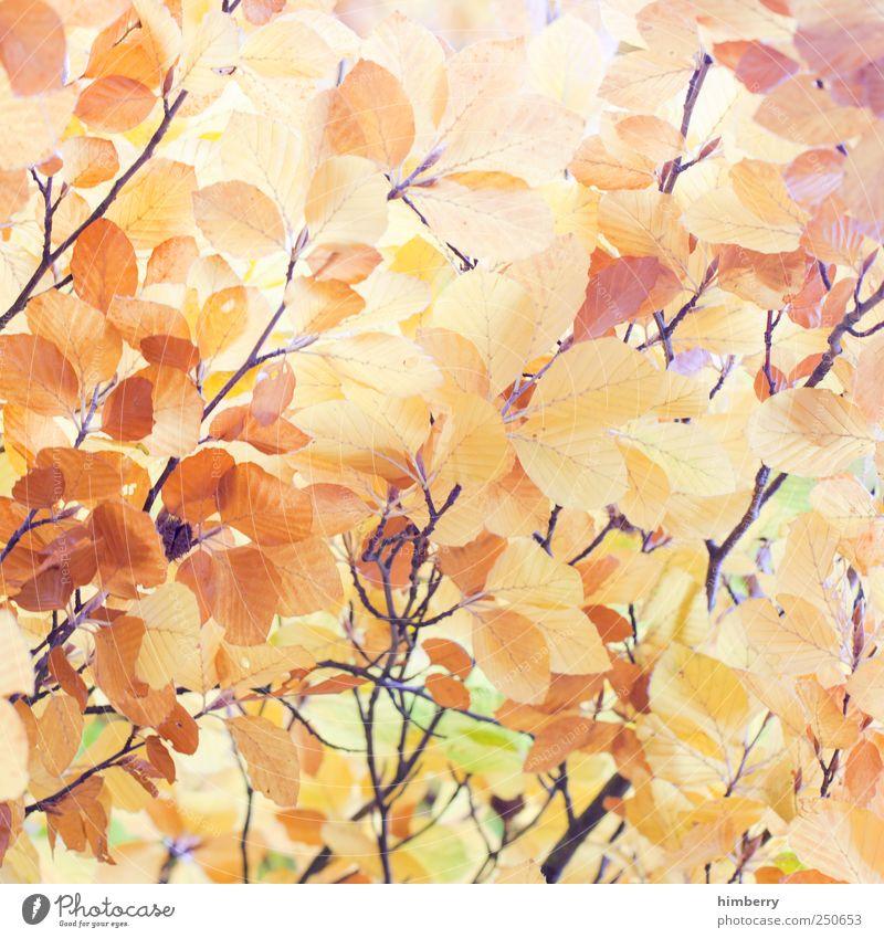 golden times Natur Ferien & Urlaub & Reisen Pflanze Erholung Landschaft Blatt ruhig Berge u. Gebirge Umwelt Leben Traurigkeit Herbst Stil Garten Kunst Park