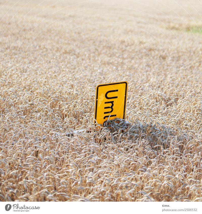 Die Geduld der Dorfjugend Natur Landschaft Freude Leben gelb Umwelt lustig Lebensmittel Feld Schriftzeichen liegen Schilder & Markierungen Fröhlichkeit verrückt