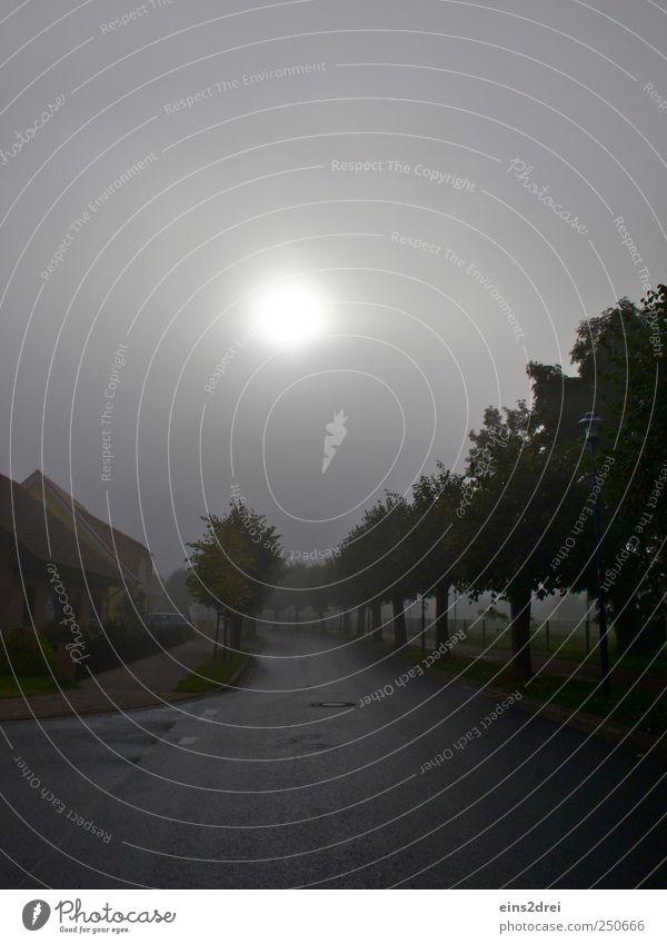 Foggy day Haus Umwelt Natur Landschaft Urelemente Mond Klima Wetter Nebel Pflanze Baum Sträucher Wiese Kleinstadt Menschenleer Einfamilienhaus Verkehrswege