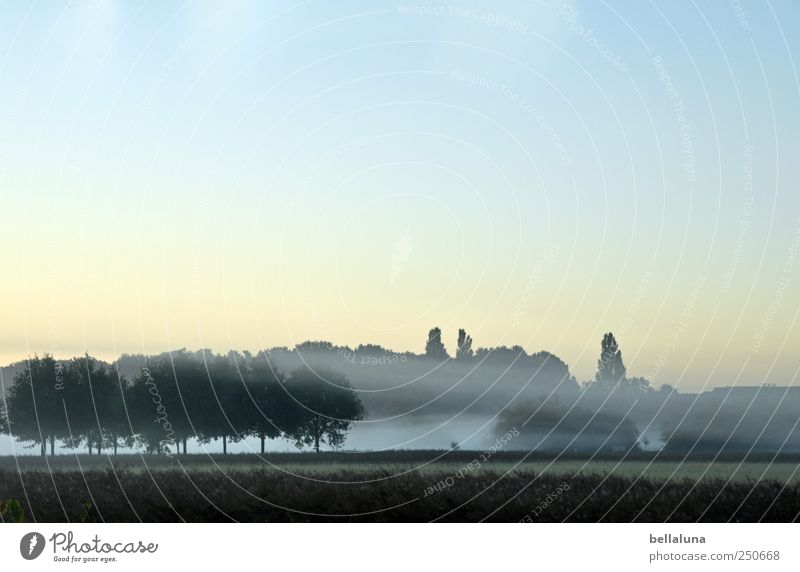 Nebelschwaden Umwelt Natur Himmel Wolkenloser Himmel Herbst Baum Feld Wald frisch schön Nebelbank Nebelschleier Nebelstimmung Nebelwand Farbfoto Gedeckte Farben