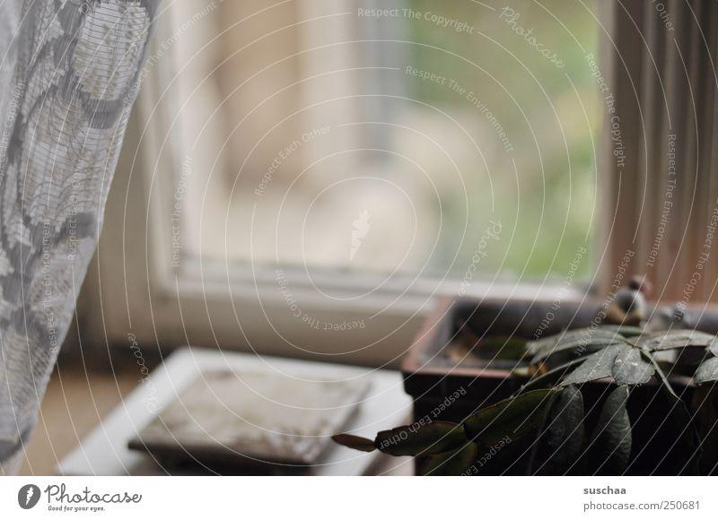 ... Kitsch Krimskrams Idylle Vergangenheit Vergänglichkeit Wandel & Veränderung Autofenster Glasscheibe Fensterrahmen Gardine Untersetzer Blumentopf triest öde
