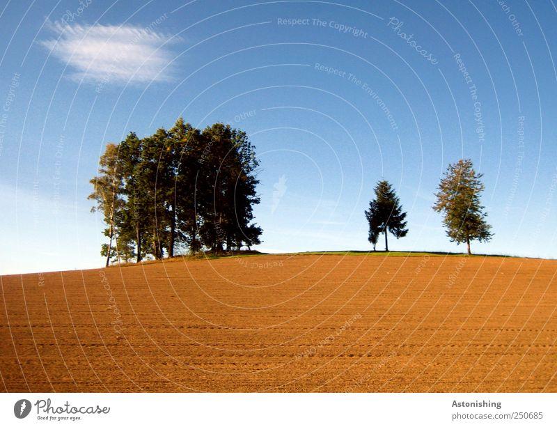 auf dem Hügel Umwelt Natur Landschaft Pflanze Erde Sand Himmel Wolken Herbst Wetter Schönes Wetter Baum Feld stehen hoch Landwirtschaft Ackerbau Nadelbaum