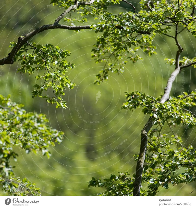 Es grünt so grün harmonisch Wohlgefühl Zufriedenheit Erholung ruhig Ausflug Ferne Freiheit Umwelt Natur Sommer Wald ästhetisch einzigartig erleben Leben schön