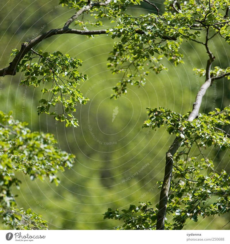 Es grünt so grün Natur grün schön Sommer Blatt ruhig Wald Ferne Erholung Umwelt Leben Freiheit Luft träumen Zeit Wind