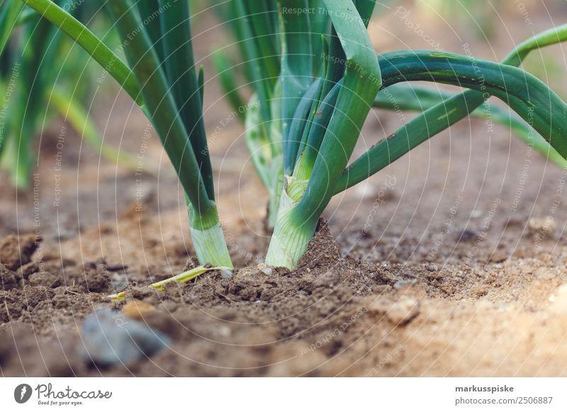Bio Lauch Zwiebeln Lebensmittel Gemüse Salat Salatbeilage Lauchgemüse Porree Lauchstange Ernährung Essen Picknick Bioprodukte Vegetarische Ernährung Diät Fasten