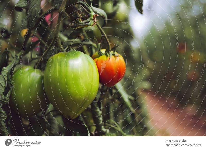 Bio Tomaten im Gewächshaus Gemüse Bioprodukte Vegetarische Ernährung Diät Slowfood nachhaltig Harvest agriculture bloom breed breeding childhood conservatory