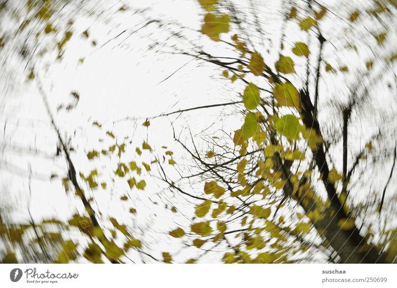baum II Umwelt Natur Luft Himmel Herbst Klima Klimawandel Wetter Wind Sturm Baum dunkel grün Einsamkeit Bewegung Vergangenheit Vergänglichkeit