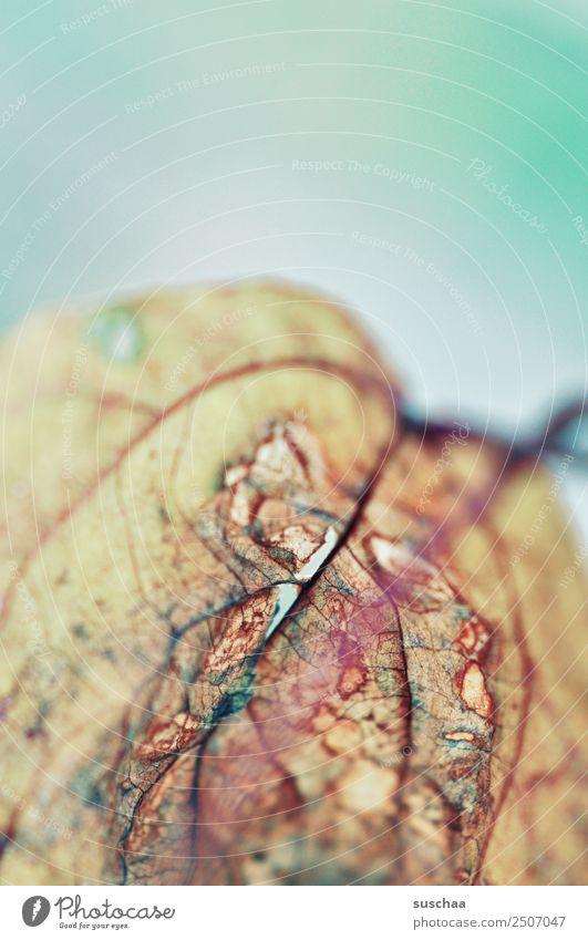 blatt (2) Blatt Natur Pflanze Strukturen & Formen Blattadern Vergänglichkeit Tod Detailaufnahme Nahaufnahme verästelt Sommer Herbst trocken Dürre alt