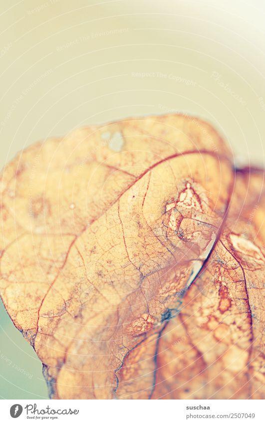 blatt (1) Blatt Natur Pflanze Strukturen & Formen Blattadern Vergänglichkeit Tod Detailaufnahme Nahaufnahme weich hell verästelt Sommer Herbst trocken Dürre alt