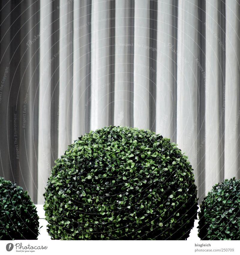 rundgemacht Pflanze Grünpflanze Topfpflanze Fenster grau grün Kugel Kreis kreisrund Farbfoto Gedeckte Farben Außenaufnahme Menschenleer Textfreiraum oben Tag