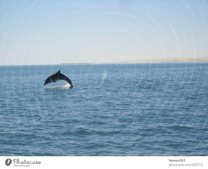 Ecco the Dolphin Natur Wasser blau Ferien & Urlaub & Reisen Meer Tier Freiheit springen Ausflug Tourismus Fisch Fröhlichkeit Wildtier Delphine
