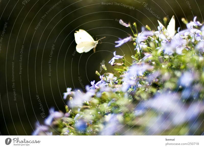 Berliner Balkonfauna II Natur grün Pflanze Sommer Blume Blatt Tier dunkel Umwelt Garten Blüte hell sitzen fliegen Flügel violett