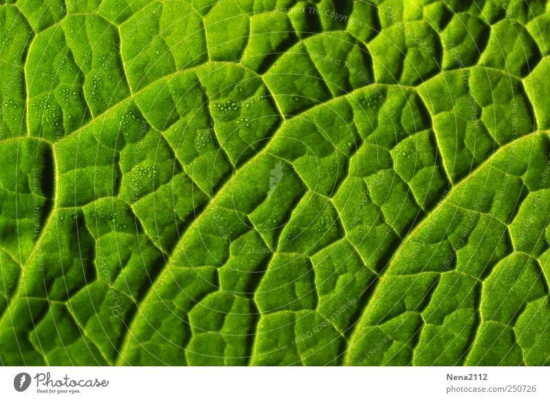 Blattläusestraßenkarte Natur grün Pflanze Wassertropfen Tau graphisch Grünpflanze Grafische Darstellung Nutzpflanze