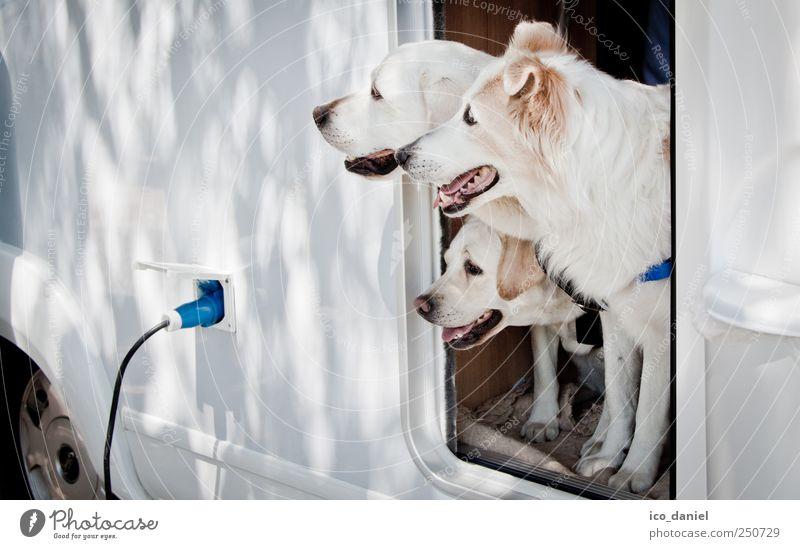 ...guck guck.. blau weiß Sommer Tier Leben Freiheit Hund lustig Freundschaft Ausflug Tourismus Autotür Tiergruppe Team Reisefotografie Tiergesicht
