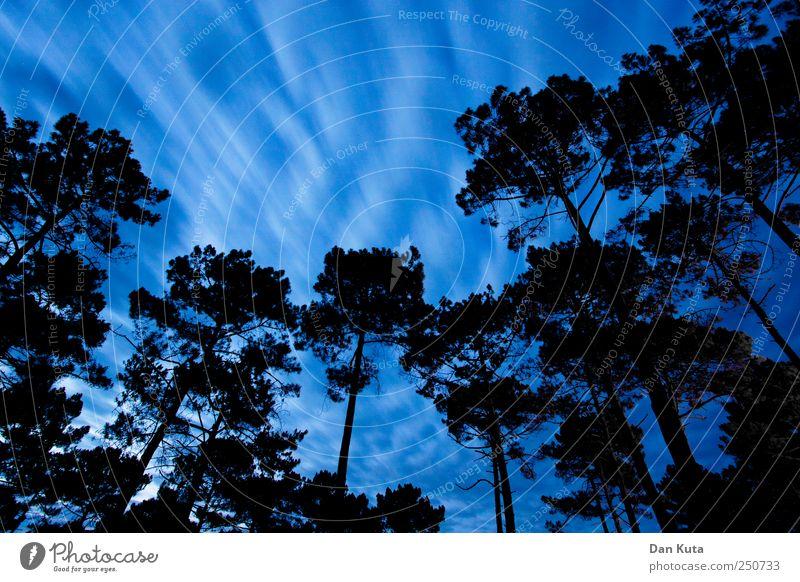 Zugkraft Himmel Wolken Klimawandel Sturm authentisch dunkel Bewegungsunschärfe Pinie Waldlichtung Waldrand Weitwinkel Langzeitbelichtung hochgewachsen