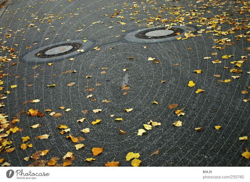 Zertreuung Umwelt Herbst Klima schlechtes Wetter Verkehrswege Wege & Pfade kalt gelb gold grau schwarz Straße Straßenbelag Asphalt Gully Abfluss trist