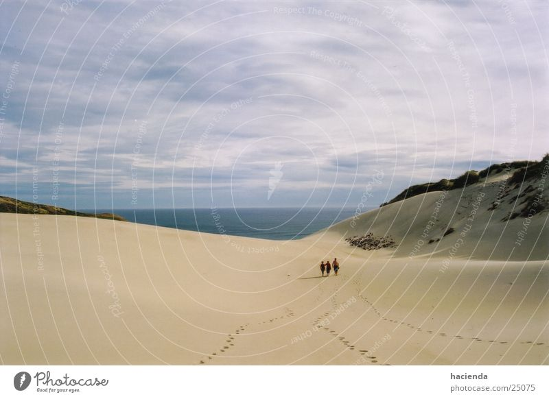 the beach Strand groß Horizont Stranddüne Neuseeland