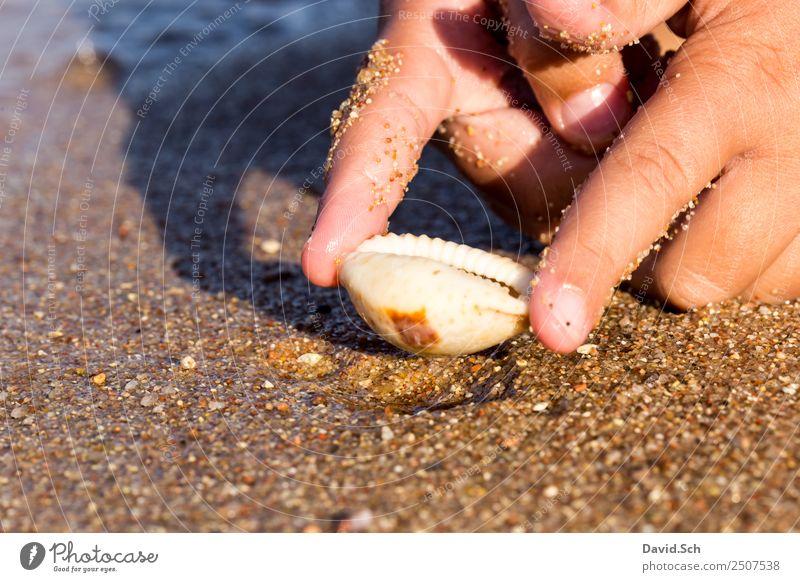 Finger eines Kindes halten eine Kaurimuschel am Strand Freizeit & Hobby Ferien & Urlaub & Reisen Hand 1 Mensch 3-8 Jahre Kindheit Natur Sand Küste Schnecke