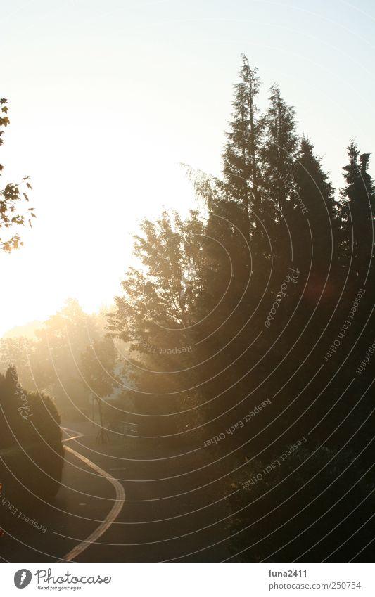 erhellender Moment Sonnenaufgang Sonnenuntergang Sonnenlicht Nebel Baum Dorf Inspiration Gedeckte Farben Außenaufnahme Morgen Morgendämmerung Lichterscheinung